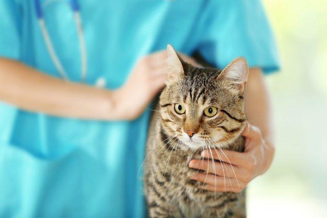 лечение отравления у кошек