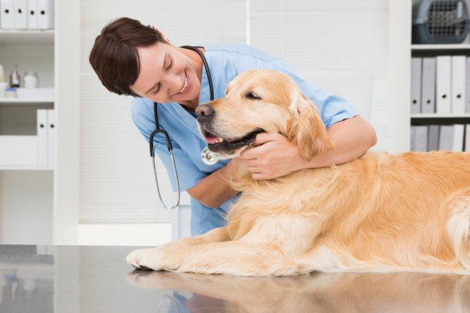Лечение пиелонефрита у собак