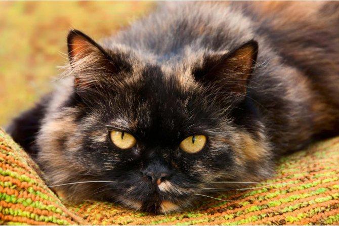лечение почек у кота
