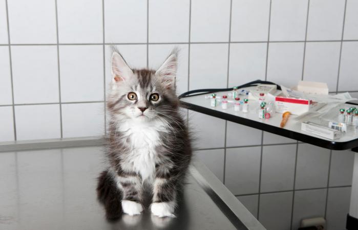 Лечение рвоты у кошки белой пеной в ветклинике