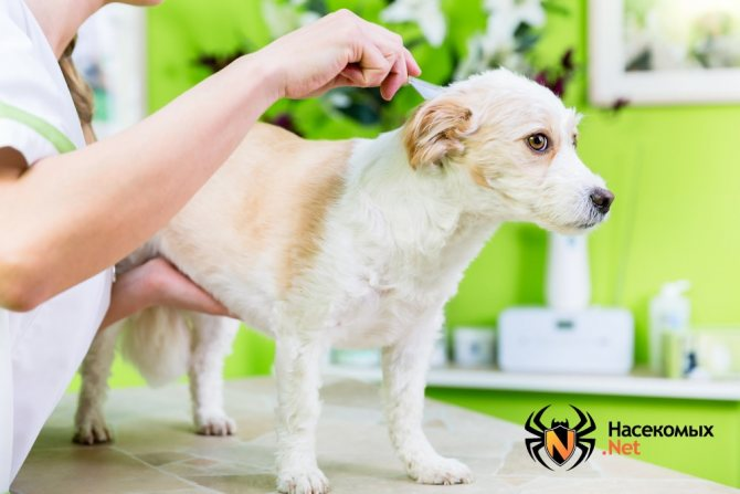 Лечение собак от вшей