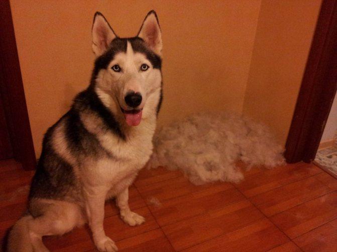 Лечение собаки от заболевания