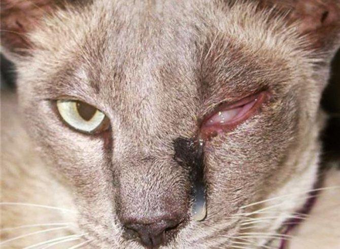 Лечение заболеваний кошек
