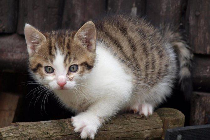 Лечение животных ветеринарами