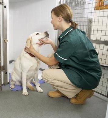лечить вагинит у собаки