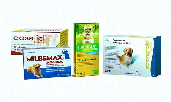 Лекарства для дечения глистов собак фото