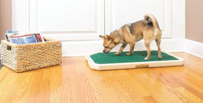 лекарства против запора собаке