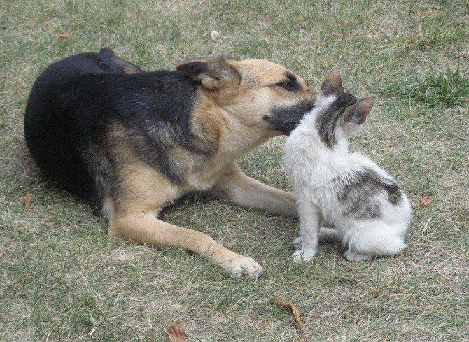 Лекарственное средство лучше всего переносится кошками и собаками