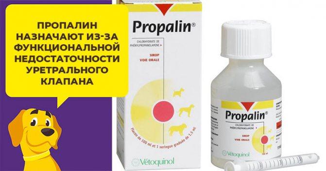 Лекарство Пропалин поможет вылечить недержание мочи у собаки