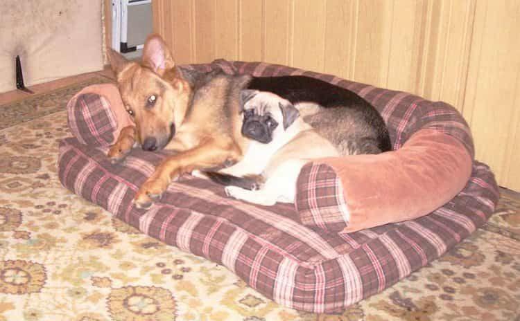 Лежаки для больших собак несколько отличаются от таких же для маленьких пород, но качественная выкройка подойдет и для первых, и для вторых.