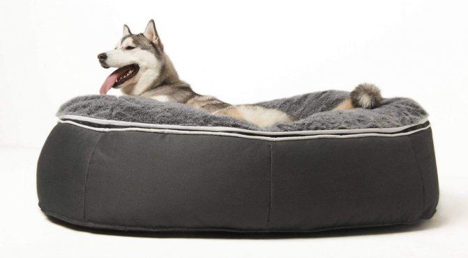 лежанка для большой собаки