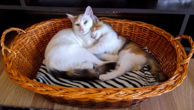 Лежанка для кошек из корзины.