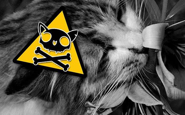 Лилии опасны для кошек