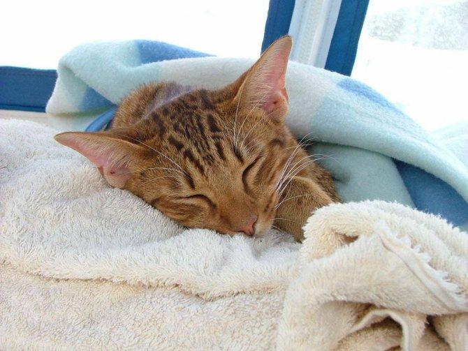 Лишай на коже лечение мазь у кошек