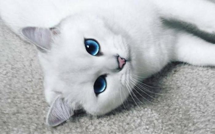 лишай от кошки у человека лечение