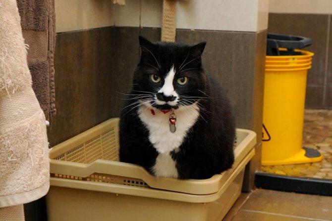 Лоток с решеткой больше подходит кастрированным котам и стерилизованным кошкам