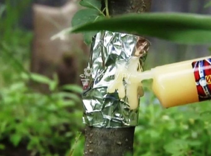 Ловчий пояс на из фольги со специальным гелем от муравьев