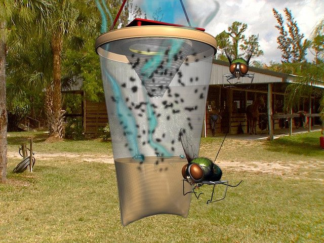 Ловушки для мухи фото