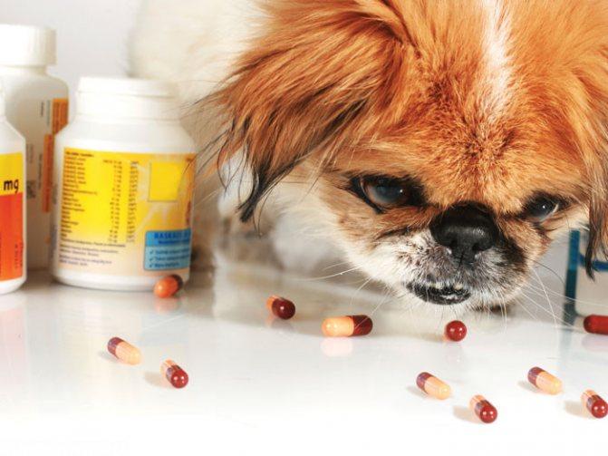 лучшие пробиотики для собак