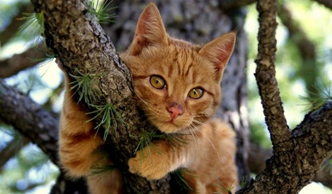 Любимые лакомства животного могут побудить его спуститься