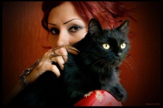 Люди видели в кошке обернувшуюся ведьму.