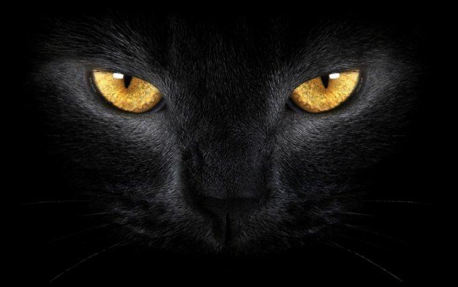 магический взгляд кошки