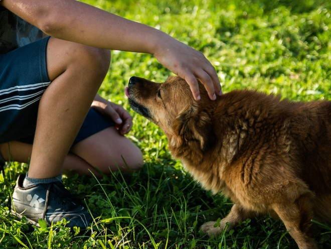 Мальчик гладит собаку