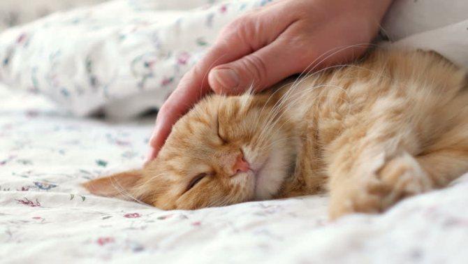 маленькая кошка