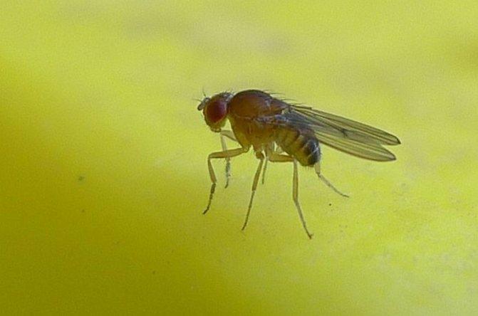 маленькая муха