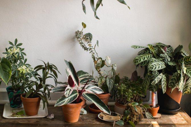 Маленькие белые жучки в земле комнатных растений и цветов