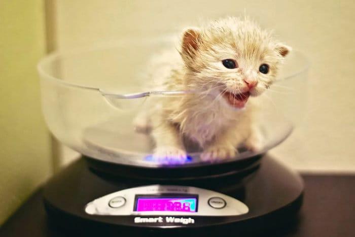 Маленький котенок сидит на весах