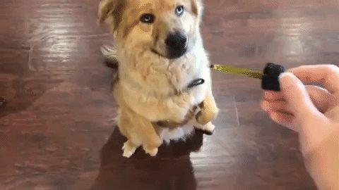 Масло собаке