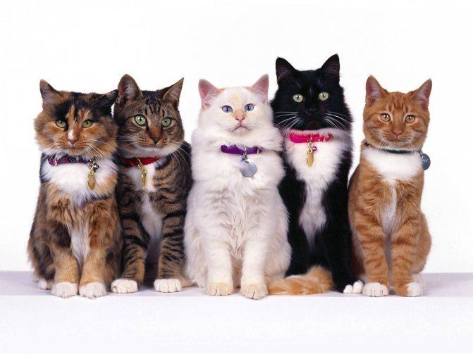 Мастер-класс для любителя кошек: как сделать ошейник питомцу своими руками. Как сделать ошейник кошке своими руками Как сделать из бисера ошейник для кошки