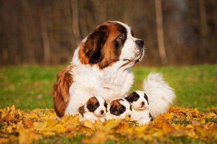мастометрин инструкция по применению для собак