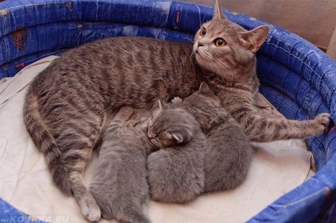 Материнское молоко