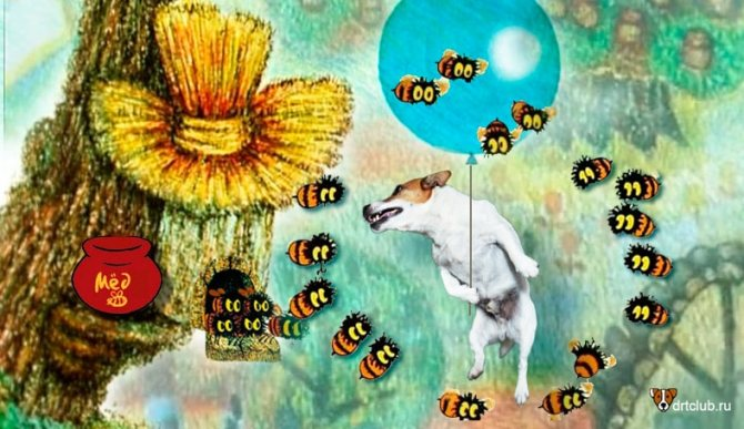 Мёд для собак