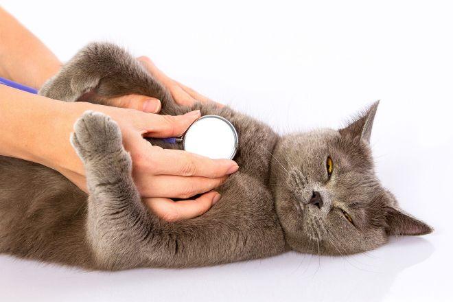 медицинская помощь кошкам и котам