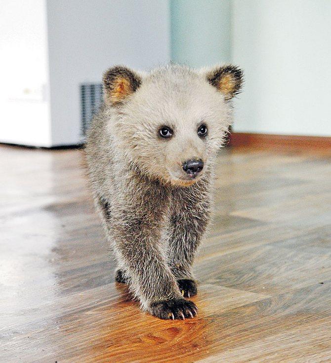 Медведь Фото: Кирилл ПЕНКИН