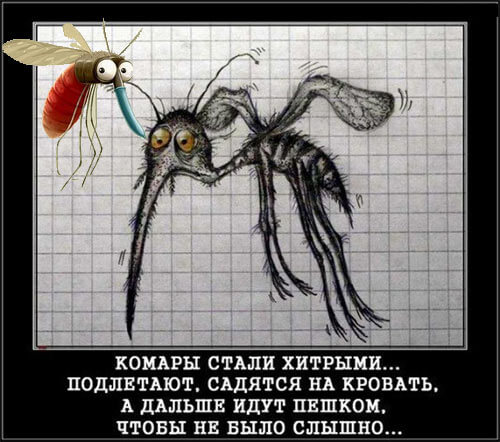 Механизм укуса комара