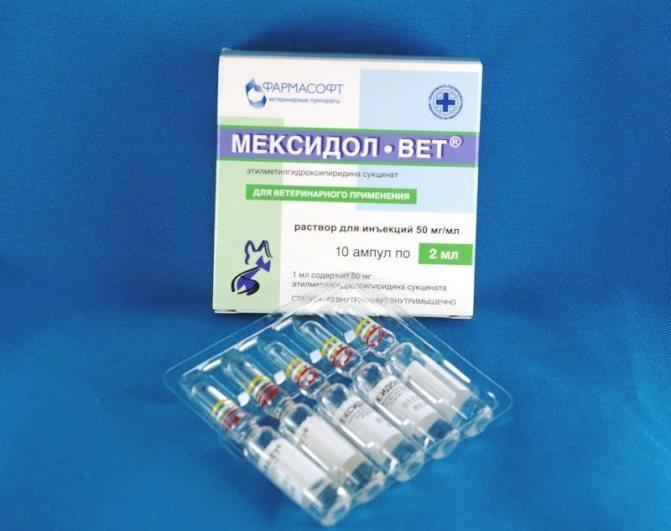 Мексидол ветеринарный инструкция. Инструкция по применению антиоксиданта мексидол-вет. Действие и показания к применению