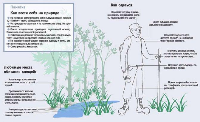 Меры предосторожности при посещении леса