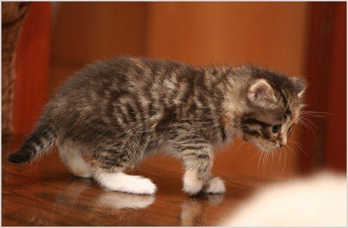 Месячный котенок
