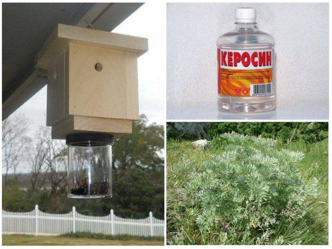 Методы борьбы с дикими пчелами
