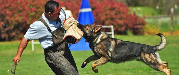 Методы, как научить собаку команде фас