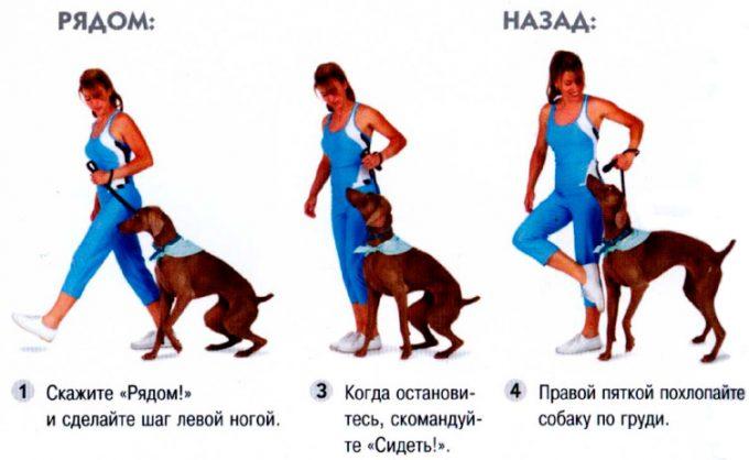 методы обучения команде рядом для собаки