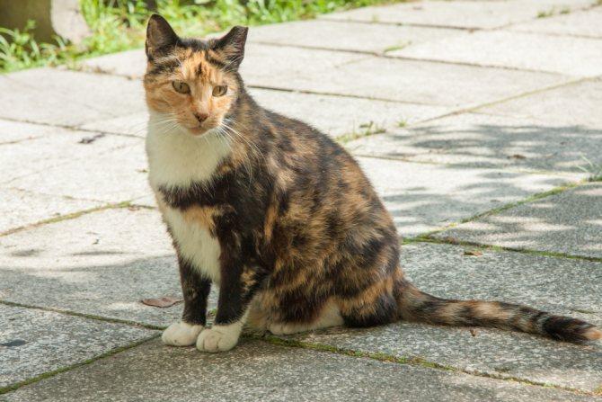 Метят ли кошки территорию как коты