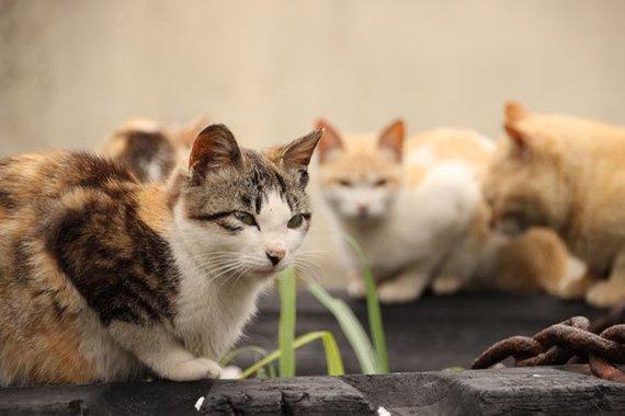 Мифология Японии. Кошки-демоны