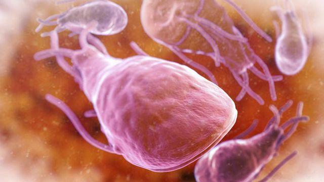 Микроорганизмы Giardiacanis