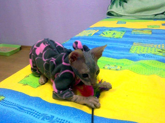 Милая пижама для кота или кошки