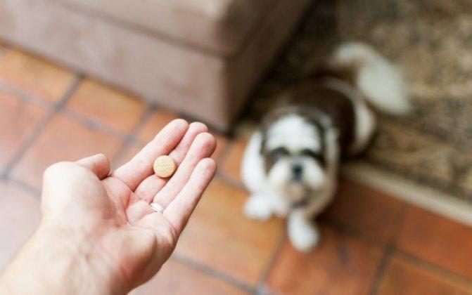 Мильбемакс для кошек и собак инструкция по применению